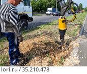 Разрушение пня дерева с помощью спецтехники (2020 год). Редакционное фото, фотограф Вячеслав Палес / Фотобанк Лори