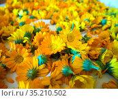 Цветки календулы сохнут на листе бумаги. Стоковое фото, фотограф Вячеслав Палес / Фотобанк Лори