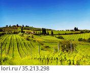 Vineyards on a sunny summer day, Italy (2014 год). Стоковое фото, фотограф Наталья Волкова / Фотобанк Лори
