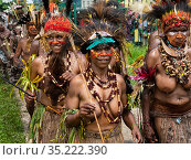 Papuan women with painted faces in traditional dress. Participating in Sing-sing gathering where traditional cultures including dance and music are shared. Morobe Show, Lae, Papua New Guinea. 2019. Стоковое фото, фотограф Konrad Wothe / Nature Picture Library / Фотобанк Лори
