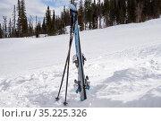 Горные лыжи с палками стоят в белом сугробе на фоне хвойного леса (2017 год). Редакционное фото, фотограф Светлана Попова / Фотобанк Лори