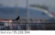 Little bird on fence of airport. Стоковое видео, видеограф Игорь Жоров / Фотобанк Лори