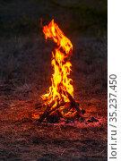beautiful pine wood fire at night. Стоковое фото, фотограф Акиньшин Владимир / Фотобанк Лори