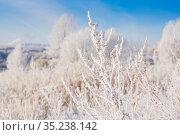 Snow-white tree branch. Стоковое фото, фотограф Дмитрий Тищенко / Фотобанк Лори