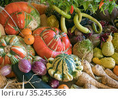 RF - Home-grown fruit and vegetables on display for a harvest festival. (This image may be licensed either as rights managed or royalty free.) Стоковое фото, фотограф Ernie Janes / Nature Picture Library / Фотобанк Лори
