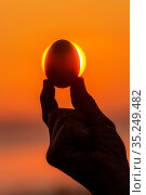 hand holds a chicken egg against the background of a sunny dawn. Стоковое фото, фотограф Акиньшин Владимир / Фотобанк Лори