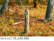 old quarter pillar in a birch forest on an autumn sunny day. Стоковое фото, фотограф Акиньшин Владимир / Фотобанк Лори