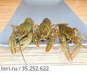 Live crayfish on a gray plate. Close-up. Стоковое фото, фотограф Мила Демидова / Фотобанк Лори