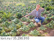 Woman frustrated by loss of cabbage harvest after drought on field. Стоковое фото, фотограф Яков Филимонов / Фотобанк Лори