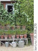 English Cottage garden watering cans. Стоковое фото, фотограф Dariusz Gora / easy Fotostock / Фотобанк Лори