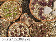 A large collection of ceramic flower pots. Стоковое фото, фотограф Dariusz Gora / easy Fotostock / Фотобанк Лори