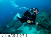 Scuba diving guide, Kenting National Park, Kenting, Taiwan. Редакционное фото, фотограф Magnus Lundgren / Wild Wonders of China / Nature Picture Library / Фотобанк Лори