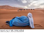 Berber man sits on the sand and watches as a camel caravan crosses the sane dunes of Erg Chebbi. Morocco. Стоковое фото, фотограф Karine Aigner / Nature Picture Library / Фотобанк Лори