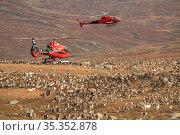 Domesticated reindeer (Rangifer tarandus) herded into enclosure by helicopters. Valdresflya, Jotunheimen, Norway, September 2020. Стоковое фото, фотограф Erlend Haarberg / Nature Picture Library / Фотобанк Лори