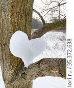 Фигурка в форме сердца из снега на ветке дерева. Стоковое фото, фотограф Мария Кылосова / Фотобанк Лори