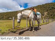 White horse with mounts tied at the Cotopaxi national park, Ecuador. Стоковое фото, фотограф Zoonar.com/Daniel Ferreira-Leites Ciccarino / easy Fotostock / Фотобанк Лори