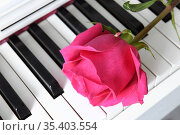 Raspberry pink rose on musical piano keyboard. Moscow, Russia. Стоковое фото, фотограф Валерия Попова / Фотобанк Лори