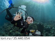Female diver with camera signalling with sun in background, California... Стоковое фото, фотограф Colin Marshall / age Fotostock / Фотобанк Лори