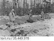 GERMANY Monschau Forest -- 02 Feb 1945 -- Camouflaged in white bedsheets... Редакционное фото, фотограф Jonathan William Mitchell / age Fotostock / Фотобанк Лори