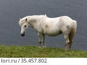 Horse in the Faroe Islands. Стоковое фото, фотограф Andre Maslennikov / age Fotostock / Фотобанк Лори