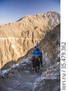 Donkey trek in Colca Canyon, Peru. Стоковое фото, фотограф Matthew Williams-Ellis / age Fotostock / Фотобанк Лори
