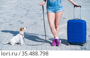 A faceless woman in shorts and sneakers is walking with luggage in hands and a puppy Jack Russell Terrier on a leash. Female legs, blue suitcase on wheels and a dog on the sidewalk. Travel with a pet. Стоковое фото, фотограф Михаил Решетников / Фотобанк Лори