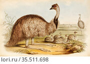 Old 19th century color lithography illustration. Illustration of ... (2020 год). Редакционное фото, фотограф Jerónimo Alba / age Fotostock / Фотобанк Лори