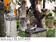 Cats on the details of ancient architecture. Стоковое фото, фотограф Яков Филимонов / Фотобанк Лори