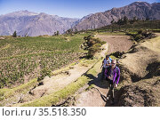 Hiking in Colca Canyon through pre Inca terraces and farmland at ... Стоковое фото, фотограф Matthew Williams-Ellis / age Fotostock / Фотобанк Лори