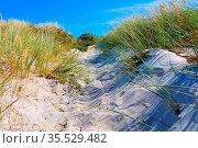 Hiddensee Strand - Hiddensee sandy beach in summer, Germany. Стоковое фото, фотограф Zoonar.com/LIANEM / easy Fotostock / Фотобанк Лори