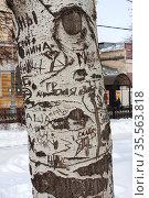 Ствол дерева. Слова на коре. (2012 год). Редакционное фото, фотограф Петрова Ольга / Фотобанк Лори