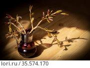 Натюрморт с веточками ольхи. Стоковое фото, фотограф Петрова Ольга / Фотобанк Лори