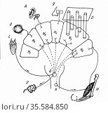 Diagram of Pavlov's findings on conditioned salivary reflex. D Organ... Редакционное фото, агентство World History Archive / Фотобанк Лори