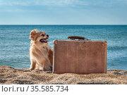 Cute joyful dog chihuahua traveler, vintage brown suitcase on sandy beach, summer vacation, blue sea and sky background. Стоковое фото, фотограф Андрей Копылов / Фотобанк Лори
