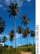 Coconut tress at Sematan beach, Sarawak, Malaysia. Стоковое фото, фотограф Chew Chun Hian / age Fotostock / Фотобанк Лори