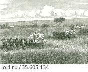 Horse-drawn mechanical harvesters in use near Adelaide, Australia... Редакционное фото, агентство World History Archive / Фотобанк Лори