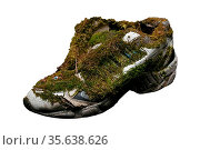 Old sneakers covered with moss on a white background. Стоковое фото, фотограф Zoonar.com/Lazarenka Sviatlana / age Fotostock / Фотобанк Лори