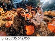 Young girls sit on haystacks among pumpkins. The concept of rural... Стоковое фото, фотограф Zoonar.com/Oleksii Hrecheniuk / easy Fotostock / Фотобанк Лори