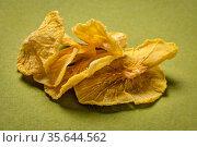 Dried slices of yacon tuber on green handmade paper. Yacon contains... Стоковое фото, фотограф Zoonar.com/Marek Uliasz / easy Fotostock / Фотобанк Лори