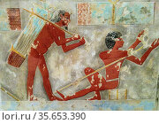 Men Splitting Papyrus, Tomb of Puimre. Copied by Hugh R. Hopgood (... Редакционное фото, агентство World History Archive / Фотобанк Лори