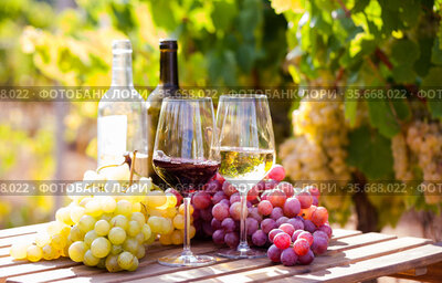 glasses of red and white wine and ripe grapes on table in vineyard