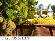 still life with glass of White wine grapes and bread on table in field. Стоковое фото, фотограф Татьяна Яцевич / Фотобанк Лори