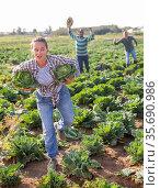 Woman fleeing farm field with stolen cabbages. Стоковое фото, фотограф Яков Филимонов / Фотобанк Лори