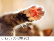 cat's paw stretched up against the background of a light window. Стоковое фото, фотограф Акиньшин Владимир / Фотобанк Лори