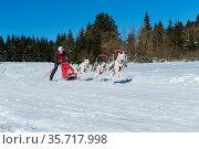 Deutsche Meisterschaft Schlittenhunderennen Frauenwald 2015. Стоковое фото, фотограф Zoonar.com/H.Eschrich / age Fotostock / Фотобанк Лори