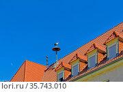 Johannes Fink Grundschule Böhl, Storchennest, Storch. Стоковое фото, фотограф Bernd J. W. Fiedler / age Fotostock / Фотобанк Лори