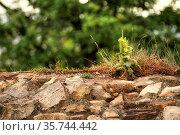 Burgmauer der Ruine Schauenburg, Castle wall of the ruin of Schauenburg... Стоковое фото, фотограф Zoonar.com/Gerd Herrmann / easy Fotostock / Фотобанк Лори