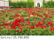 Schloßgarten vom Schloß Mirabell - der herrlich-blühende Rosengarten... Стоковое фото, фотограф ROHA-Fotothek Fuermann / age Fotostock / Фотобанк Лори