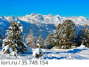 Fresh snow on the trees and the Swiss alps in the background in the... Стоковое фото, фотограф Neil Harrison / age Fotostock / Фотобанк Лори