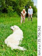 Paar trainiert einen Golden Retriever Hund im Garten im Sommer. Стоковое фото, фотограф Zoonar.com/Robert Kneschke / age Fotostock / Фотобанк Лори